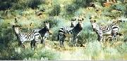 A herd of Zebra