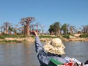Baobabs from the boat